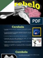 Cerebelo, Partes del cerebro, El cerebelo