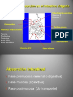 Absorcion.ppt