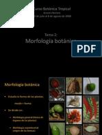 Tema 2. Morfologia de Plantas