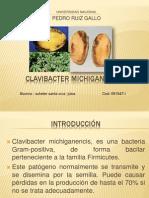CLAvibacter michiganensis