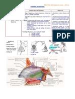 Anatomofisiología Rinosinusal