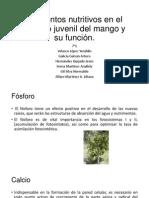 Elementos Nutritivos en El Periodo Juvenil Del Mango