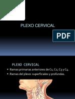 06PLEXOCERVICAL.ppt