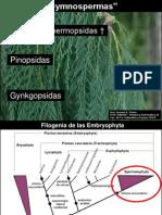 clase 8 Gymnospermas 2013.pdf