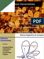 Clase 12-Hamamelidae-2014.pdf