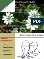 Clase 13-Caryophiliidae-2014.pdf