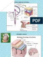 sistem nervos trunchi, nervi cranieni.ppt