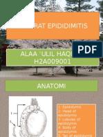 PPT REFERAT Epididimiitis (1)