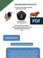 Manipulasi sperma untuk efisiensi produksi ayam dan anak sapi