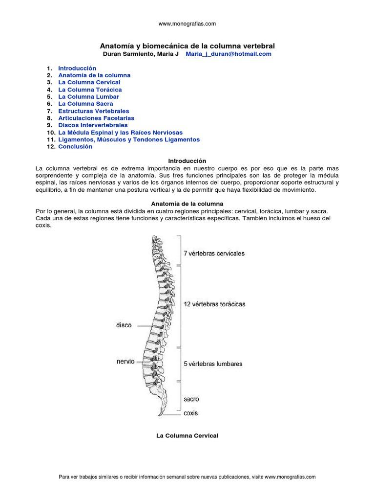 anatomia-columna-vertebral.docx