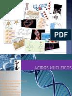 biologia_diapositivas_NUCLEICOoooooooooooooooo ultimo.ppt