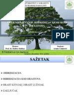 OPLEMENJIVANJE HIBRIDIZACIJOM KOD HRASTOVA (Quercus sp.)