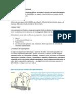 Artrosis Acromioclavicular y Ejercicios