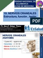 19-NerviosCraneales-2014