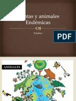 Plantas y Animales Endemicos SInaloa