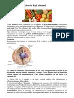 La Frequenza Vibrazionale Degli Alimenti