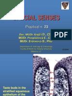Senses Prelab23 En1