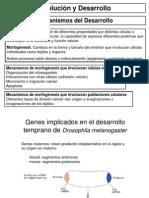 Genes HOX