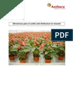 Manual Anthurium Pot Plants SPA