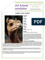 pdf Camel