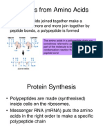 As 2 1 1 Protein Structure