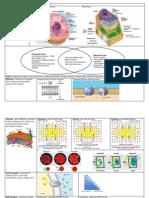 2biology-eoc-reviewcells-2013
