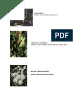 Plantas y Flores (región Coquimbo)