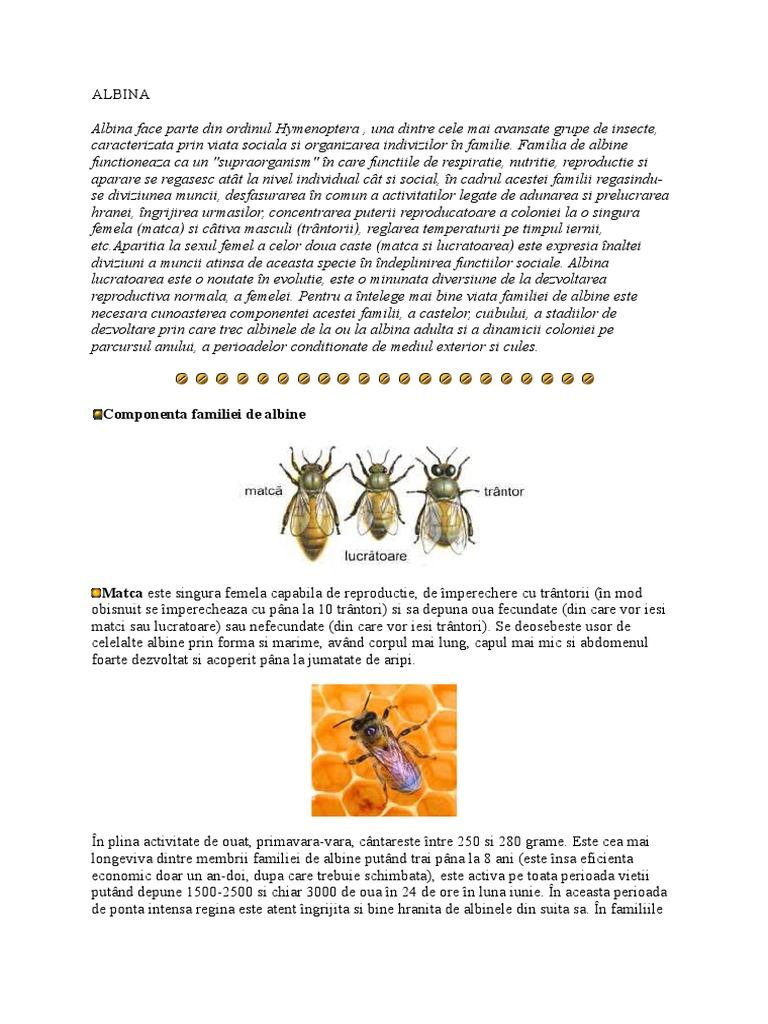 viteza de albine se datorează