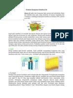 Struktur Komponen Membran Sel