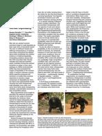 Carvalho Et Al. 2012 Chimpanzee Bipedal Carrying Behaviour