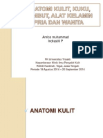 Anatomi kulit sabi