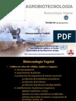 In VITRO Agrobiotecnologia