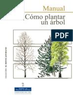 Como Plantar Un Arbol
