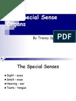 Special Senses Presentation for AP