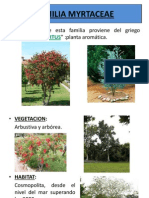 Familia Myrtaceae
