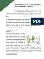 Estructura de La Flor y Forma de Polinizacion Del Trigo y Otros