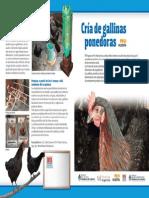 INTA - Cria de Gallinas 1