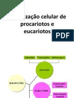 Organização Celular de Procariotos e Eucariotos