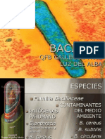 Bacillus, Clostridium y Corynebacterium