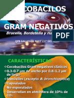 Cocobacilos Gram - Brucella, Bordetella y Haemophilus