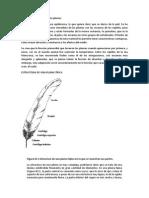 Estructura Histológica de Las Plumas