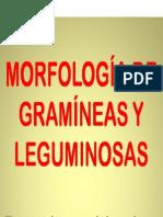 187451236.Gram y Legum