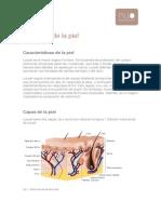 Anatomia y Tipos de Piel