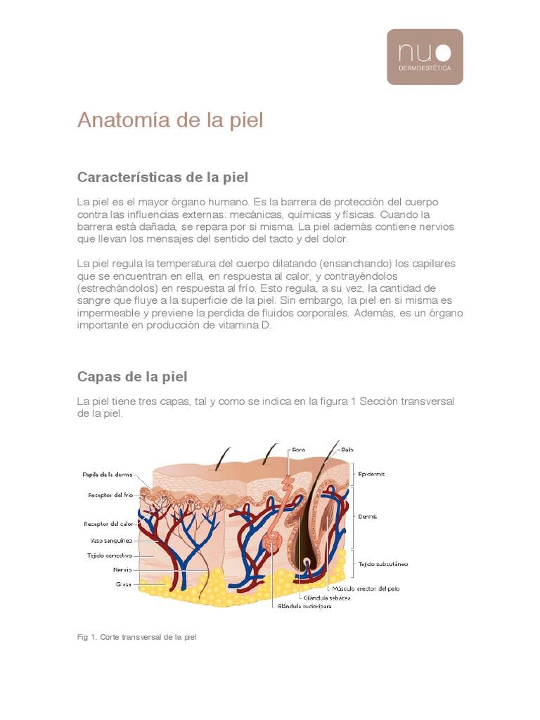 Hermosa Definición De La Sección En La Anatomía Inspiración ...