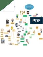 Desiciones Mercado Global- Mapa Mental