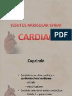 Tesut Muscular 2 2014