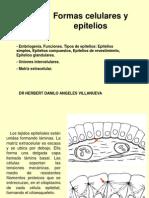 Segunda Clase-histologia