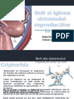 Boli Ale Sistemului Reproducator La Om