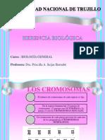 Herencia Biologica y Mutacion1