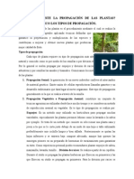 EN QUE CONSISTE LA PROPAGACIÓN DE LAS PLANTAS.doc